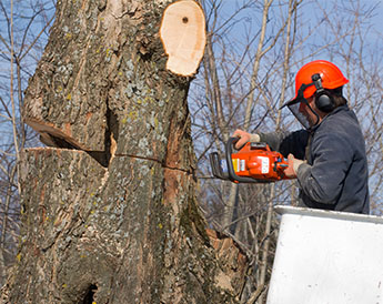Man Cutting Down a Tree in Pittsburgh, PA